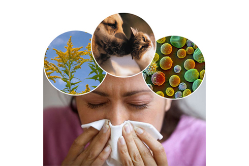 Why Allergy Sufferers Should Avoid Wet Carpet Cleaning Methods